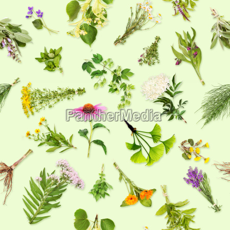 medicinal plants seamless pattern
