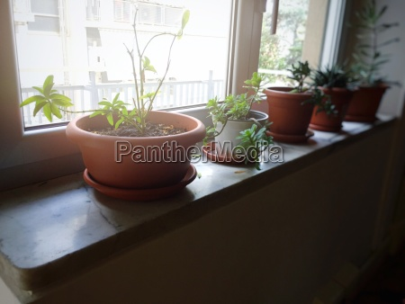 potted plants on a window sill