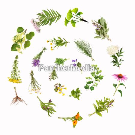 medicinal plants spiral