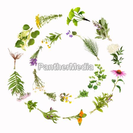 medicinal plants circles frames
