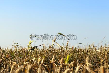 blau essen nahrungsmittel lebensmittel nahrung landwirtschaftlich