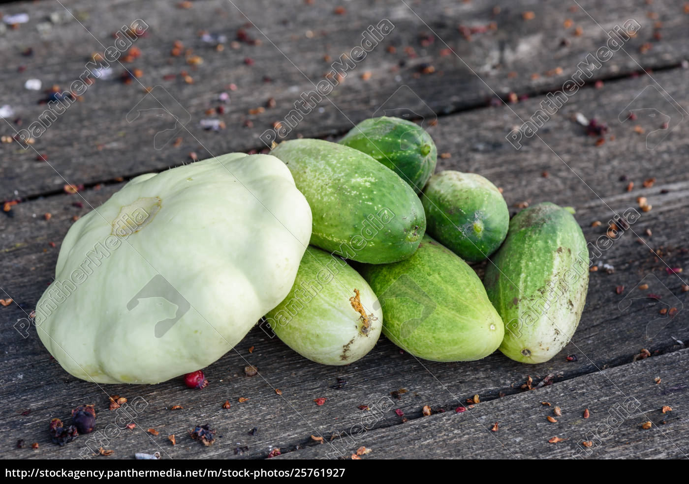 pattypan, squash, and, few, cucumbers, harvested - 25761927