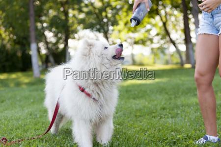 frau freizeit park hund musse