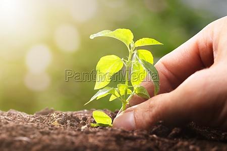 person plant sapling