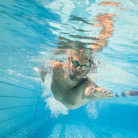 unterwasser training badespass robben schwimmende unterwasser