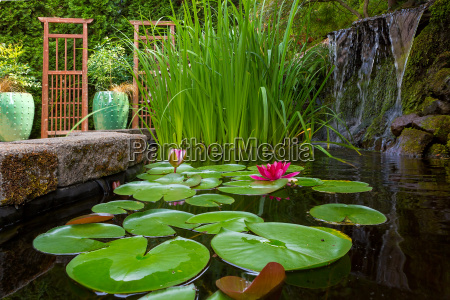 garden pond with plants and waterfall