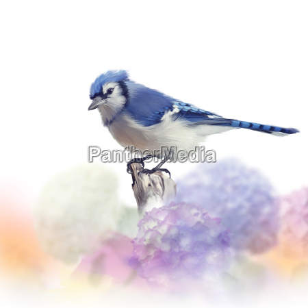 blue jay in flower garden watercolor