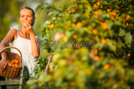 pretty young woman picking apricots lit
