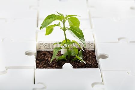 nahaufnahme einer kleinen pflanze
