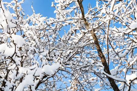 bodenansicht schneebedeckter AEste im wald