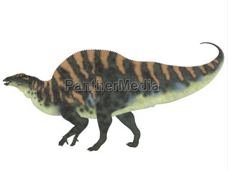 ouranosaurus seitenprofil
