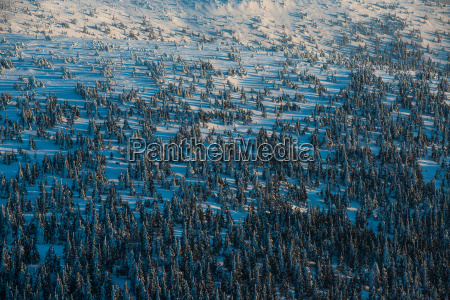 winter mountain forest alpine scenery