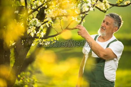 porträt, des, seniorengartens, die, pflege, seines, liebenswerten - 25835336