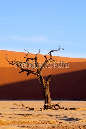 dead vlei landschaft in sossusvlei namibia
