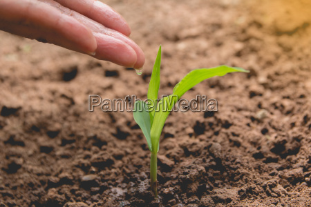 seedling concept by human hand watering