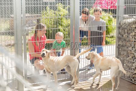 familie lernt hunde im tierheim kennen