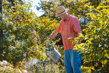 active senior man watering plants in