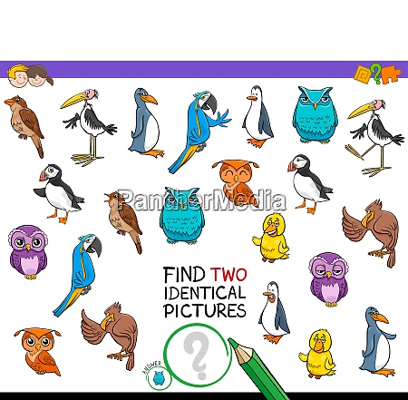 find two identical bird pictures game