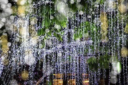 weihnachtsbaum zur weihnachtszeit