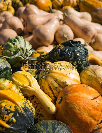 essen nahrungsmittel lebensmittel nahrung bunt farbenfroh
