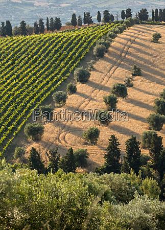 panoramablick auf olivenhaine weinberge und bauernhoefe