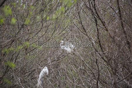 umwelt tier vogel wildlife ornithologie zoologie
