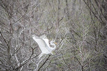 umwelt tier vogel wildlife ornithologie vogelkunde