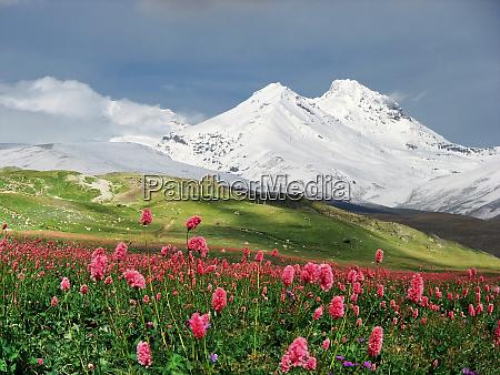 berge des kaukasus