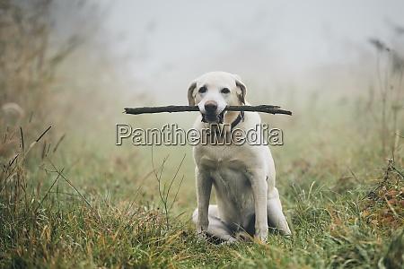 hund im herbstnebel