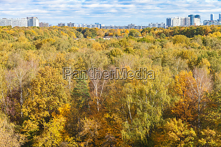 colorful forest of city district in