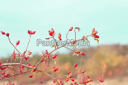 romantik herbst naturszene