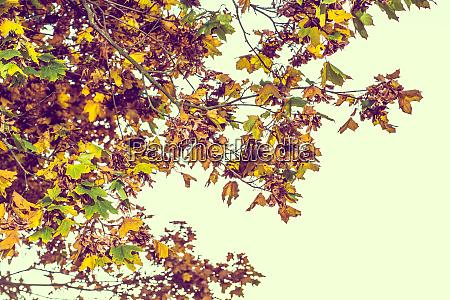 herbstbraune naturszene mit gelben blaettern