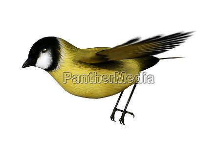 3d macht songbird goldflinch auf weiss