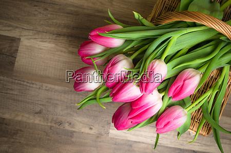 schoene blumenstrauss aus rosa tulpen auf