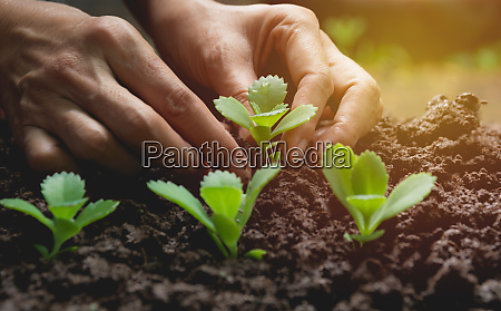 seedling concept by human hand human
