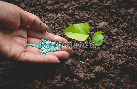 seedling concept by human hand apply
