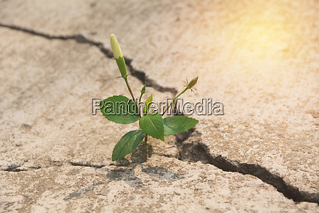 green young plant growing on the