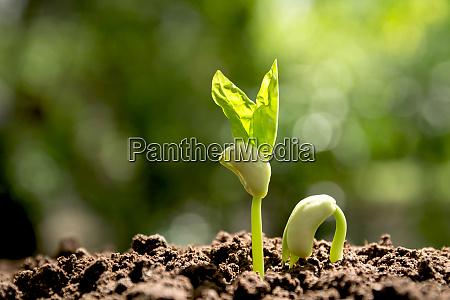 green young plant growing in the