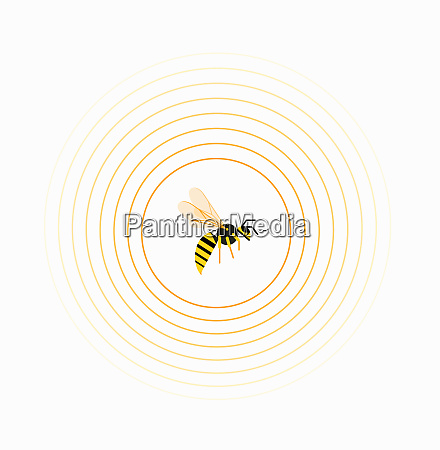 wasp inside circle pattern