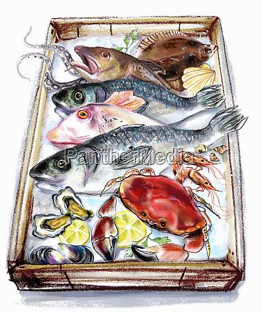 die, vielfalt, der, fische, und, meeresfrüchte - 25992244