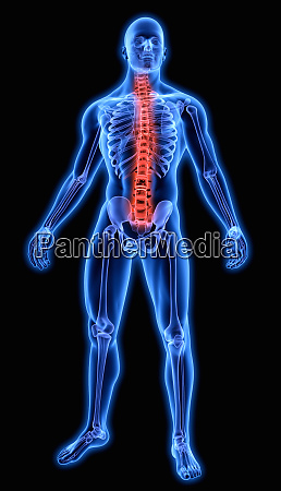 illuminated human spine in blue anatomical