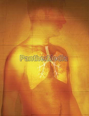 mann mit durchsichtiger haut zeigt lunge