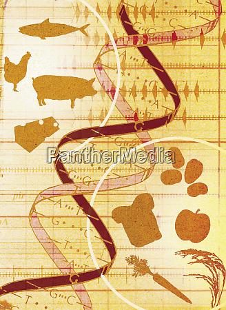 collage von tieren nahrung und dna