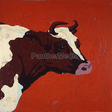 portrait of hereford cow