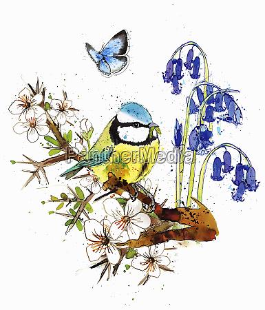 blue tit sitting on blossom branch