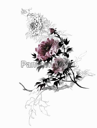 roses and rosebuds on bush
