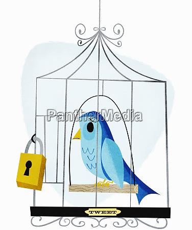 vorhaengeschloss auf vogelkaefig mit etikett tweet