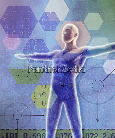 data analysis and male anatomical model