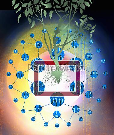binary code data around tree growing