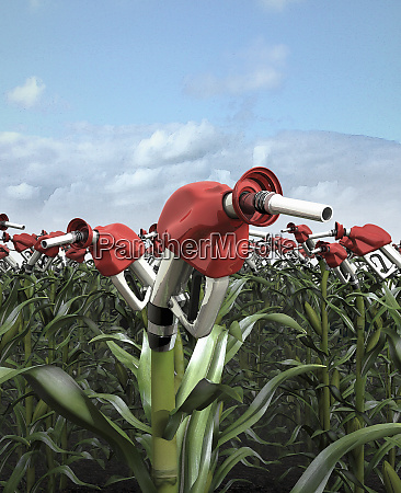 fuel pumps growing from corn stalks